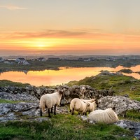 Poll: Are you planning to get away somewhere in Ireland this summer?