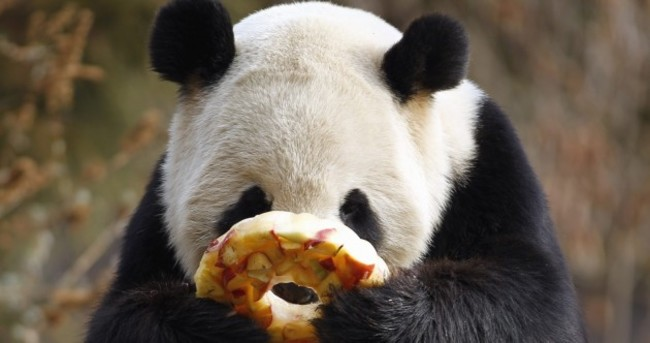 It's Friday! So here's a slideshow of pandas from around the world