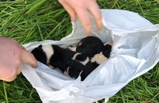 'Disturbing': Three newborn puppies found dangling over river in plastic bag