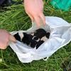 'Disturbing': Three newborn puppies found dangling over river in plastic bag