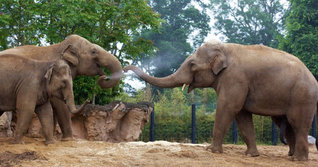 PHOTOS: Dublin Zoo's new elephant is the largest animal in the zoo
