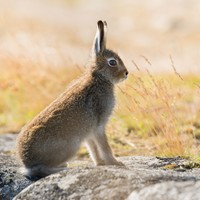 Deadly virus reemerges across rabbit and hare populations in four counties