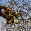 Concern for 'distressed' tree at Leinster House