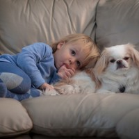 New study finds that babies with pets are healthier