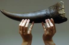 Limerick man jailed in US for trafficking endangered rhino horns