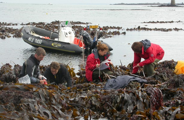Kelp found off coast of Ireland, France and Scotland has 'survived since last ice age 16,000 years ago'