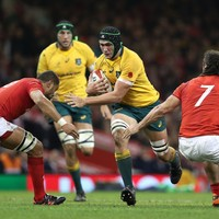 Declan Kidney adds another experienced Wallaby to his London Irish squad