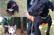 Gardaí launch appeal to trace owners as 10 suspected stolen dogs recovered