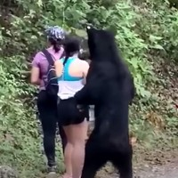 Mexican authorities investigating after wild bear that approached woman and got in selfie is castrated