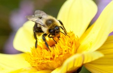 Quiz: How much do you know about bees?