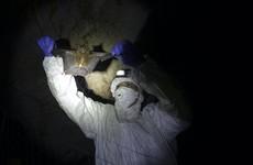 Bats caught in Thai countryside as researchers probe coronavirus origins