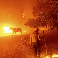 Wildfires wreak havoc as thousands evacuated amid 'extraordinary weather' in California