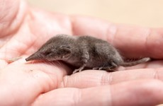 Quiz: How much do you know about these small mammals?