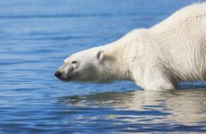 Polar bear kills man at campsite on Norway's Arctic Svalbard Islands