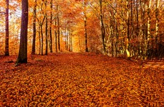 Poll: When does autumn start...it's tomorrow, right?
