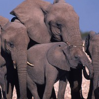 Human activity sends wildlife into 'freefall' with 66% drop in global populations since 1970
