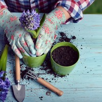 Sitdown Sunday: The therapeutic power of gardening
