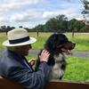 President Higgins' dog Síoda dies following short illness