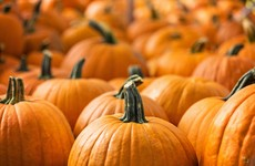 Quiz: How much do you know about pumpkins?
