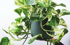 6 hardy houseplants for anyone who's terrible at keeping plants alive