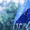 Bring a brolly out with you this week - it's going to be wet and windy