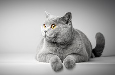 Sitdown Sunday: What cats can teach us about living - according to a philosopher