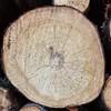 Environmental activist challenges bid to chop down trees in Cavan