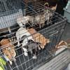 Gardaí seize 32 dogs worth more than €150,000 in Dublin