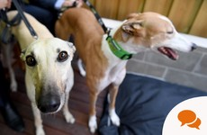 Holly Cairns: The greyhound industry is inherently cruel – so why should the taxpayer fund it?
