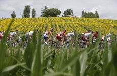 Tour de France: Gilbert's strange incident of the dog in the road