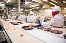 Meat processing workers subject to 'difficult and dangerous' conditions with regular injuries at work