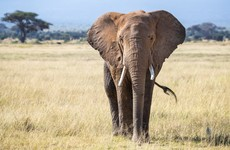Namibia is planning to sell 170 live elephants because of drought and conflict