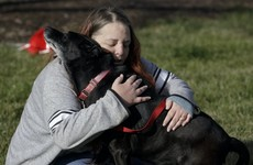 Dog reunited with owners after going missing for over three years