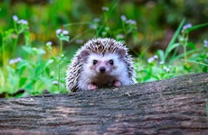 Dublin teen accused of torturing hedgehog in 35-minute attack spared custodial sentence