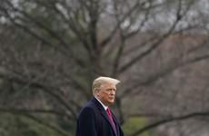 Trump's Twitter account was hacked in October, Dutch prosecutors claim despite denials from Washington