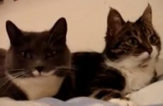 Miaow! Welcome to the world's first internet cat video film festival