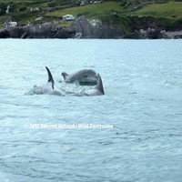 VIDEO: Cute clip of the day - dolphins having a chat