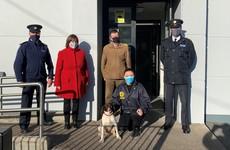 Stolen dog found in UK returned to family in Cork