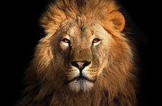 Sitdown Sunday: How six brothers and their lion terrorised a Libyan town