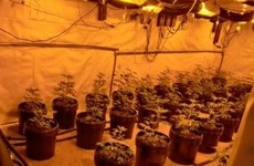 Man to appear in court after gardaí seize €130,000 of cannabis from growhouse