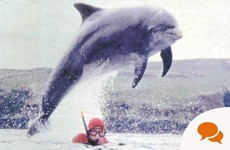 Opinion: Close encounters of the dolphin kind - swimming with Dingle's beloved Fungie