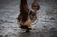 Irish Horseracing Regulatory Board issues unreserved apology over errors at Naas