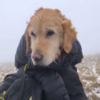 'She didn't have the energy to bark or stand': Dog missing for two weeks found in Wicklow Mountains