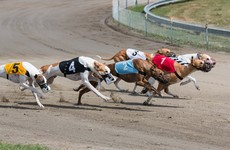 Minister told greyhound racing not sustainable from commercial perspective during Covid prior to State funding boost