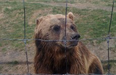 Well, that's ironic: Bearsville, NY home repeatedly ransacked by bears
