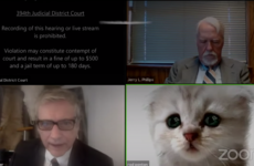 'I'm not a cat': Lawyer goes viral for accidental kitten filter