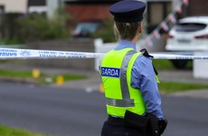 Dog dies after garda firearm discharged during house search