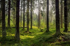 Coillte reveals Ireland's ten most popular forests as some visitor numbers triple during 2020