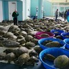 Thousands of sea turtles rescued during freezing cold snap in Texas