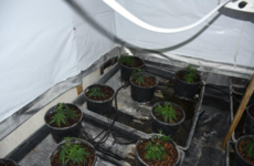 Man arrested after €90,000 worth of cannabis seized at residence in Co Louth